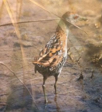 bird 1 cropped